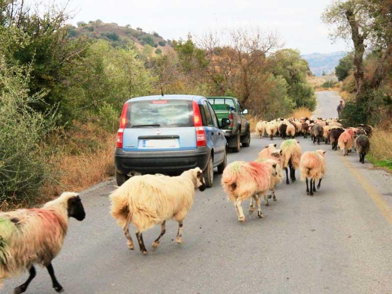 rijdt door het agrarische leven van Kreta tijdens dagtrip 35.0