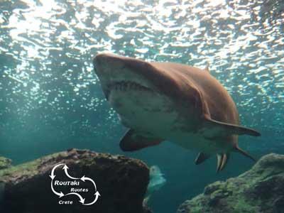 immense vissen te zien in het CretAquarium in Gournes, Kreta
