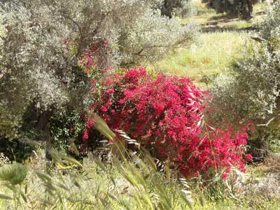 schitterende natuur in routaki road trip 32