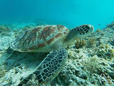 geweldige mooie schildpadden komen ook voor in Rethymno