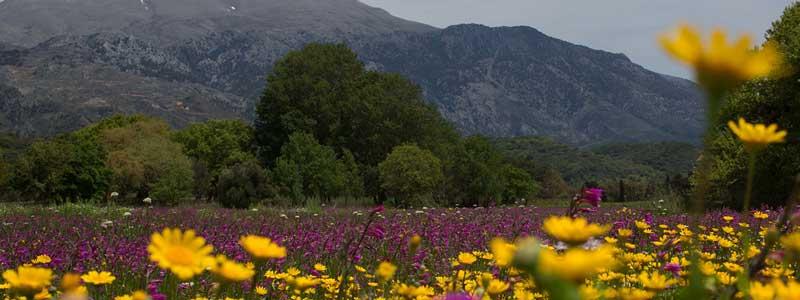 mooie kleuren tijdens de lente overal op Kreta.
