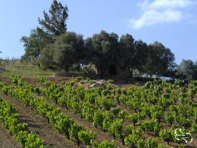 Een metoxi is een klein huisje op een olijfveld of in een wijngaard